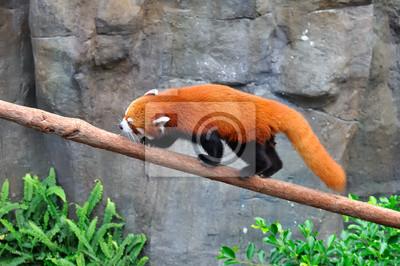 Panda Mehlschwitze sur une branche 2