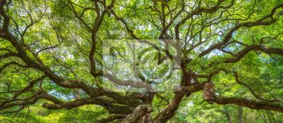 Fototapete Panorama der Zweige von der Engel Eiche