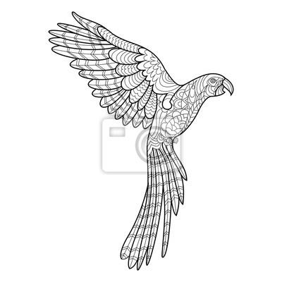 Papagei ausmalbilder für erwachsene vektor fototapete • fototapeten ...