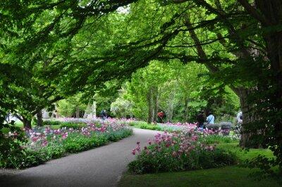 Fototapete Park