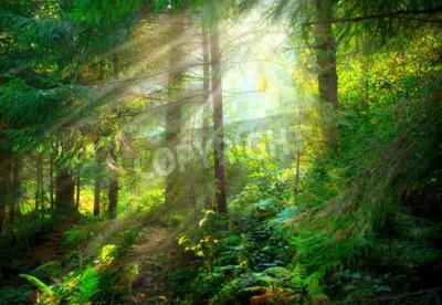Fototapete Park. Schöne nebligen alten Wald