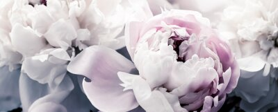 Fototapete Pastel peony flowers as floral art background, botanical flatlay and luxury branding design
