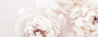 Fototapete Pastel peony flowers in bloom as floral art background, wedding decor and luxury branding design