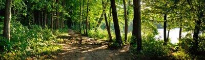 Fototapete Pfad im Wald