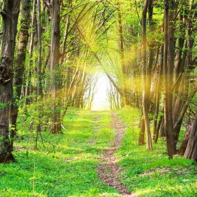 Fototapete Pfad in schönen grünen Park