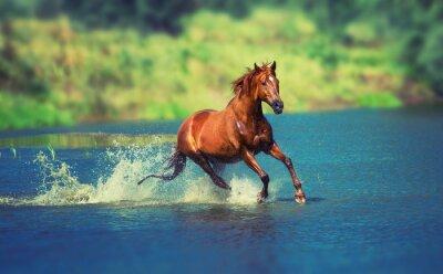 Fototapete Pferd