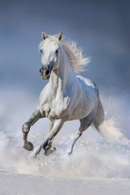 Fototapete Pferd im Schnee