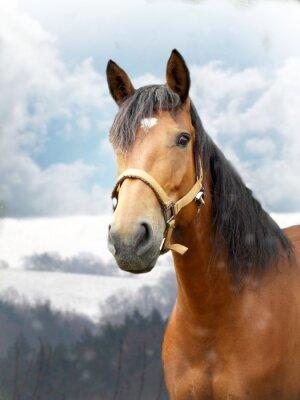 Fototapete Pferd im Winter