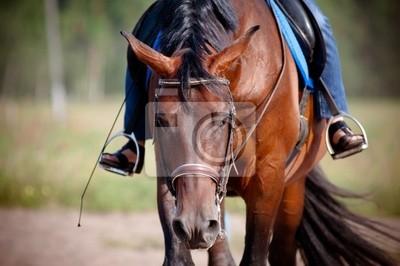 Pferd müde nach dem Training