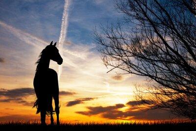 Fototapete Pferd Silhouette bei Sonnenuntergang