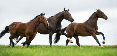 Fototapete Pferde galoppieren in einem Feld