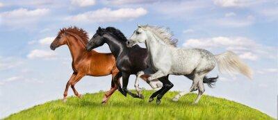 Fototapete Pferde laufen Galopp auf grünen Weide gegen schönen Himmel