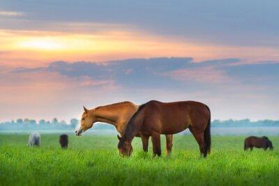 Fototapete Pferdeherde auf der Weide bei sunrize