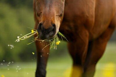 Fototapete Pferdemaul frisst
