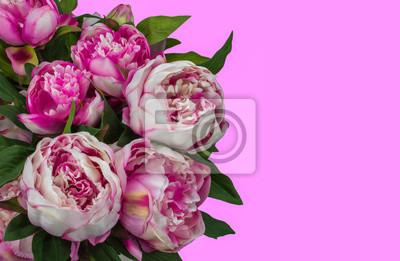 Pfingstrosen Rosa Farbige Blumen Und Hintergrund Fototapete