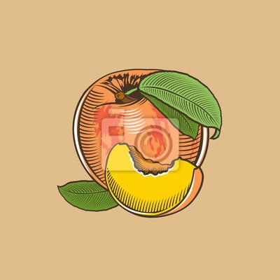 Pfirsich im Weinleseart. Farbigen Vektor-Illustration