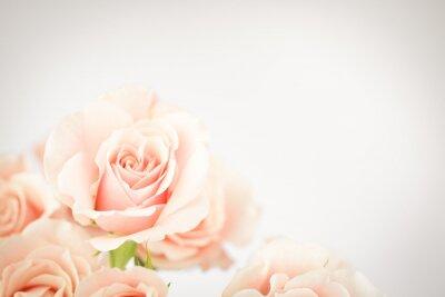 Fototapete Pfirsich-Rose-Cluster mit Vignette