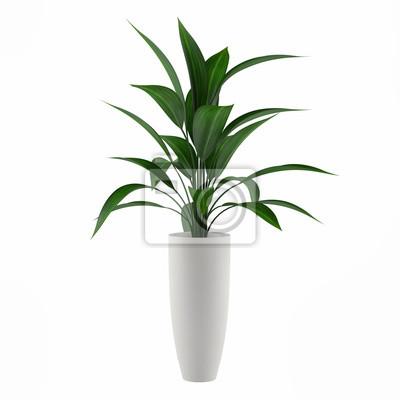 Fototapete Pflanze isoliert in den Topf