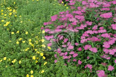 Pflanze Schöne Farbenfrohe Pflanzen In Einem Garten Fototapete