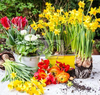 Pflanzen Im Frühling Osterglocken Tulpen Und Rapunzeln