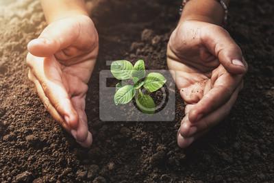 Fototapete Pflanzen wachsen mit Handschutz und Sonnenschein im Garten. Konzept Öko