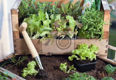 Pflucksalat Und Krauter Im Hochbeet Am Balkon Anpflanzen Fototapete