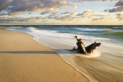 Fototapete Pień wyrzucony na morską  plażę