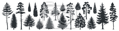 Fototapete Pine tree silhouettes. Evergreen forest firs and spruces black shapes, wild nature trees templates. Vector illustration woodland trees set on white background