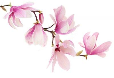 Fototapete Pink Frühjahr Magnolia Blumen Zweig