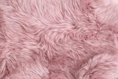 Fototapete Pink sheep fur Natural sheepskin background texture