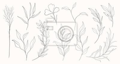 Fototapete Plant nature hand drawn set. Collection botanical element.Elegante vintage style.