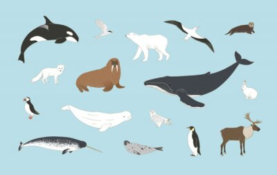 Fototapete Polar animals set on blue background in vector. Arctic birds and mammals illustration with humpback whale, orca, polar bear, arctic hare, fox, puffin, deer, beluga, owl and more