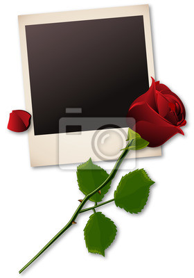 Polaroid-Bild mit roter Rose