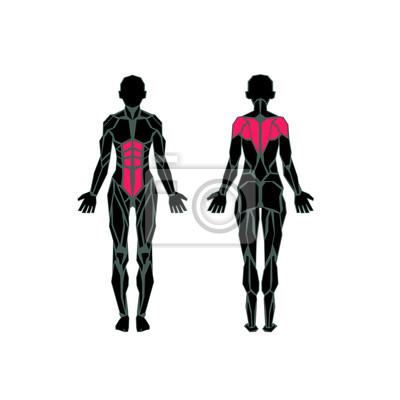 Polygonale anatomie des weiblichen muskulatur, bewegung und muskel ...