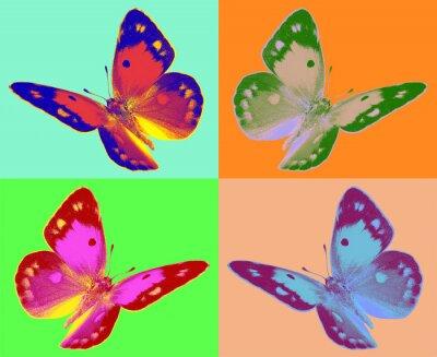 Fototapete Pop-Art-Colias Schmetterling