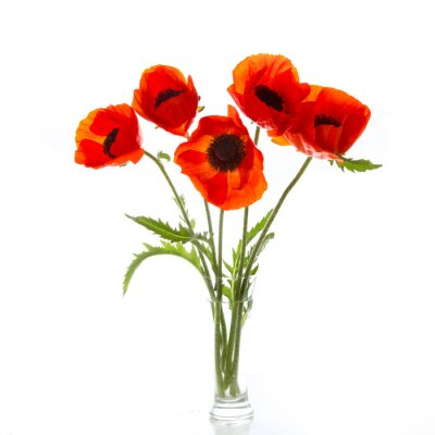 Fototapete Poppies