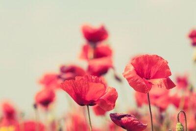 Fototapete Poppy flowers retro friedliche Sommer Hintergrund