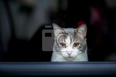 Portrait d'un chat tigre blanc qui regarde par la fenêtre