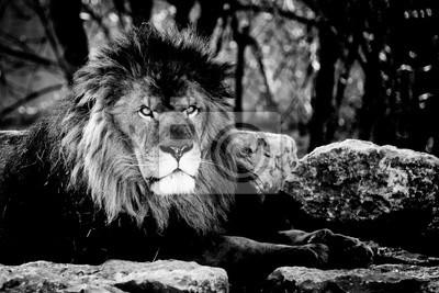Portrait d'un lion majestueux