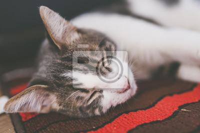 Portrait de jeune chat tigré blanc im Zug von dormir