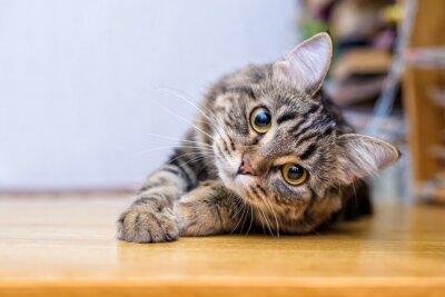 Fototapete Portrait of a beautiful gray striped cat close up