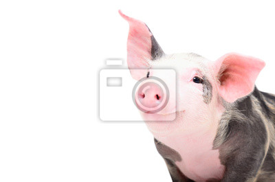Fototapete Portrait of a cute cheerful pig, isolated on white background