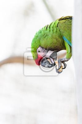 Portrait perroquet ara militaire