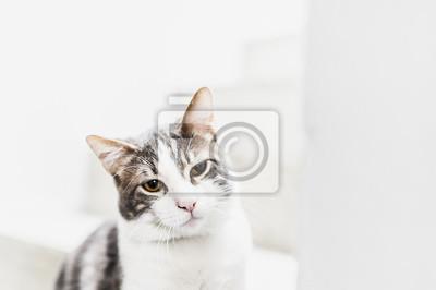 Porträt de Chat tigré blanc