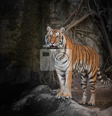 Porträt einer königlichen Bengal-Tiger