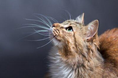 Fototapete Porträt einer schönen Katze