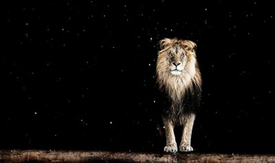 Fototapete Porträt eines schönen Löwen, geometrische Muster