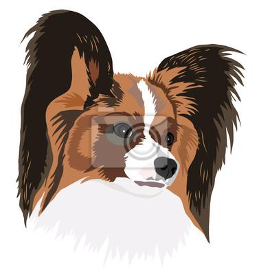 Porträt von einem Hund der Rasse papillon