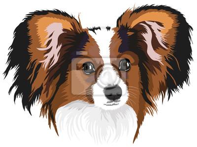 Porträt von einem Hund der Rasse Papillon.