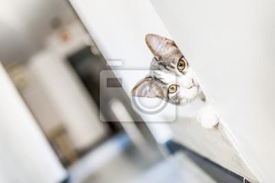 Porträt von jeune Chat blanc tigré aux yeux jaunes